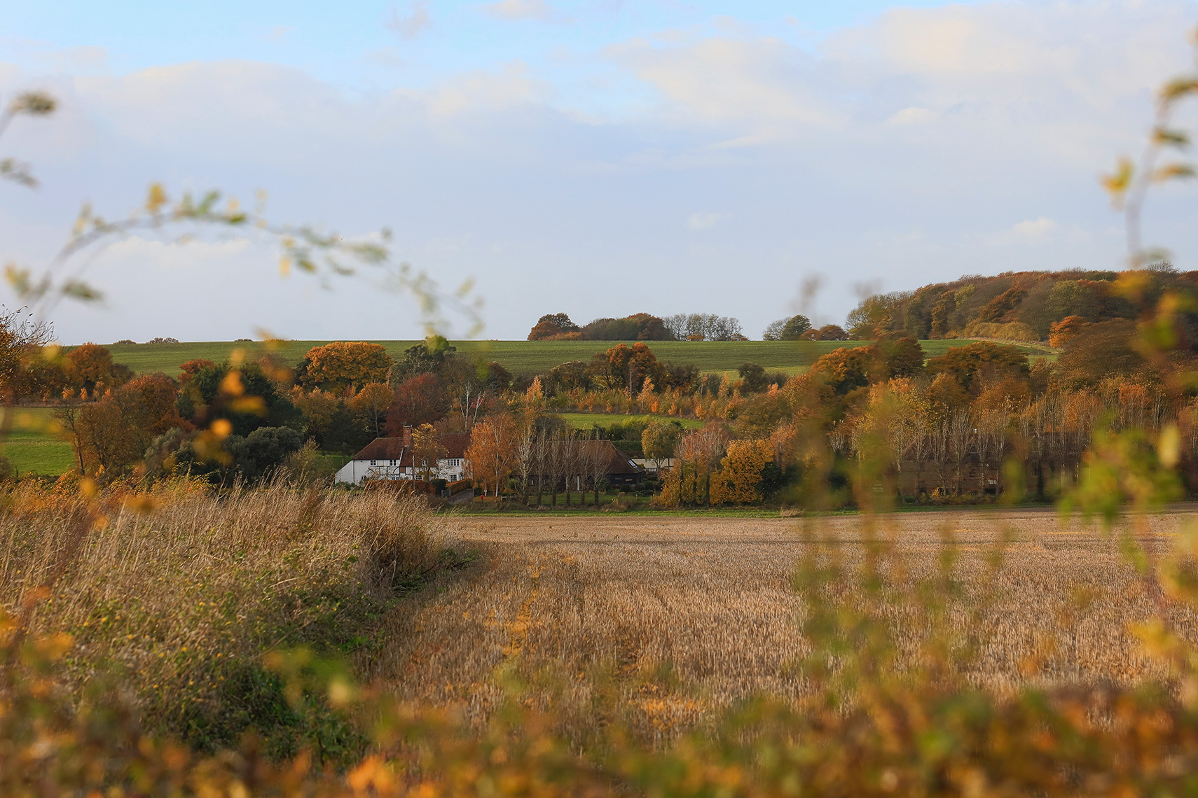 Autumn Landscape with orange and brown foliage in Adisham Kent, UK