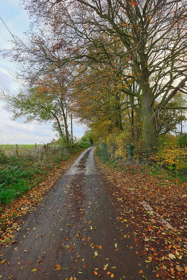 Autumn foliage along a roadside near Adisham, Kent UK